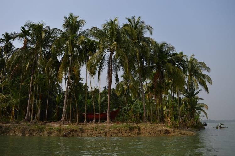 Tropicalmente bengalí